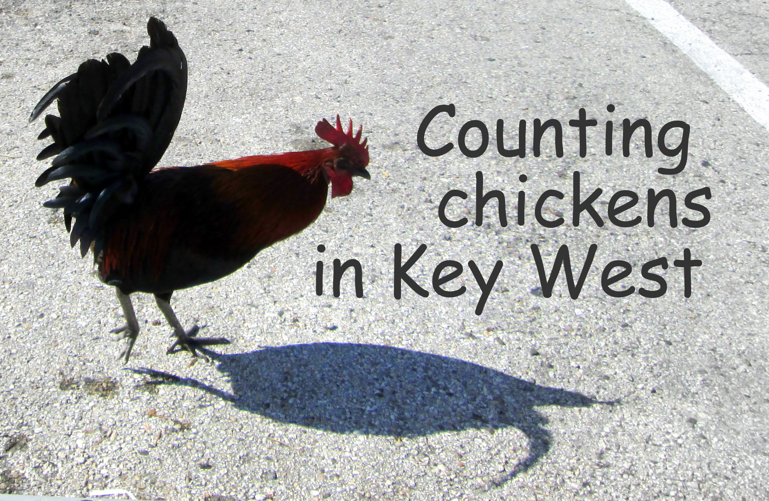 ... the Good Life Archives - Counting My ChickensCounting My Chickens