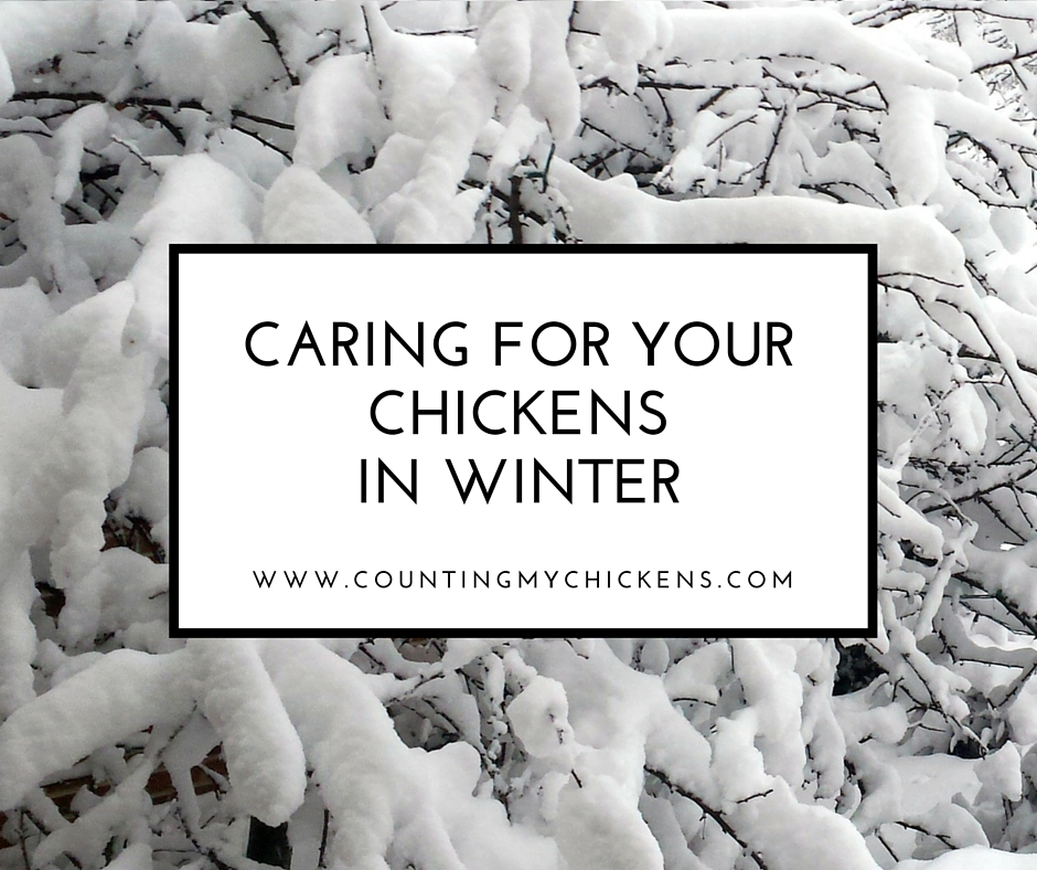 Caring For Your Chickens In Winter: A GuideCounting My